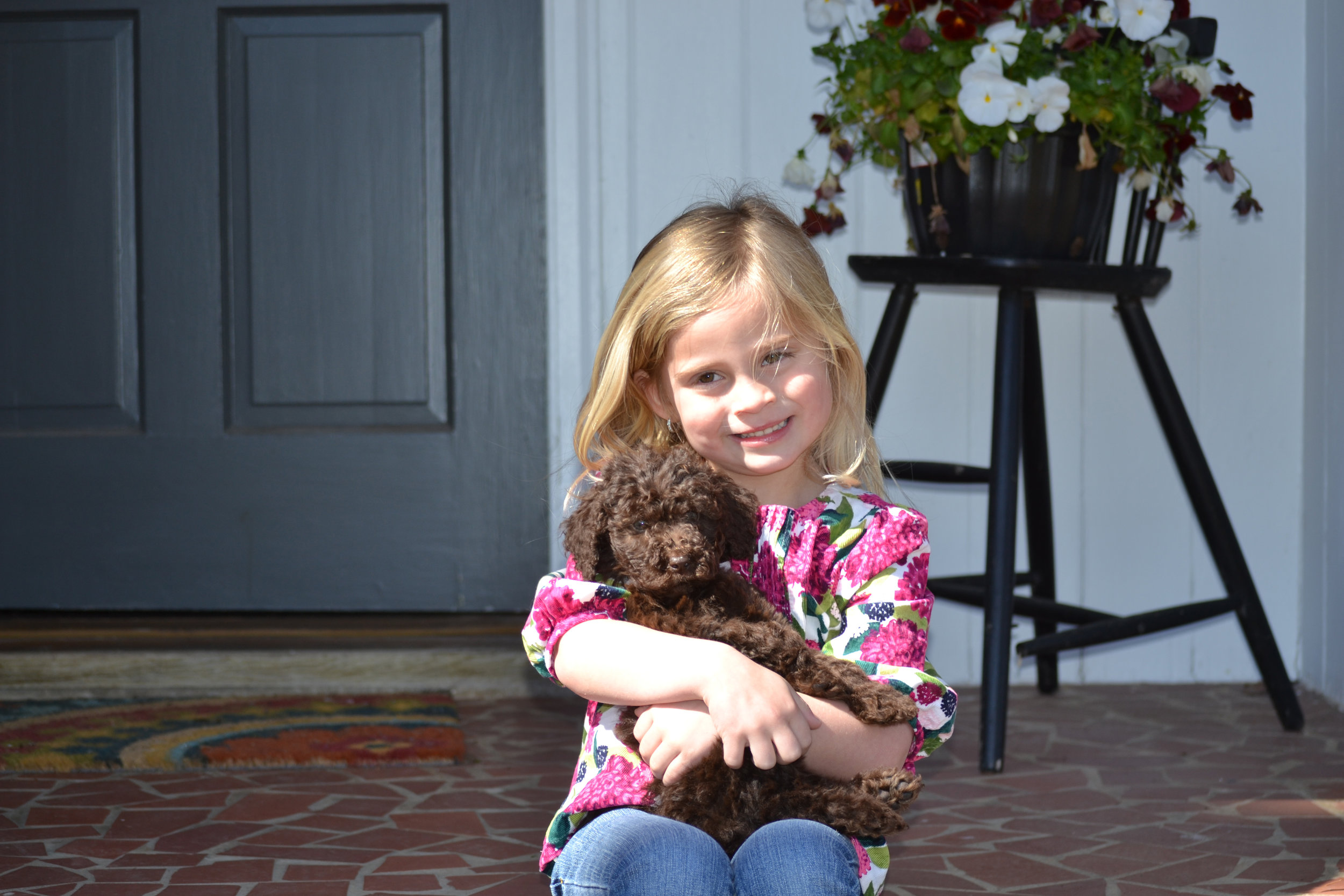 mini-labradoodle-with-girl