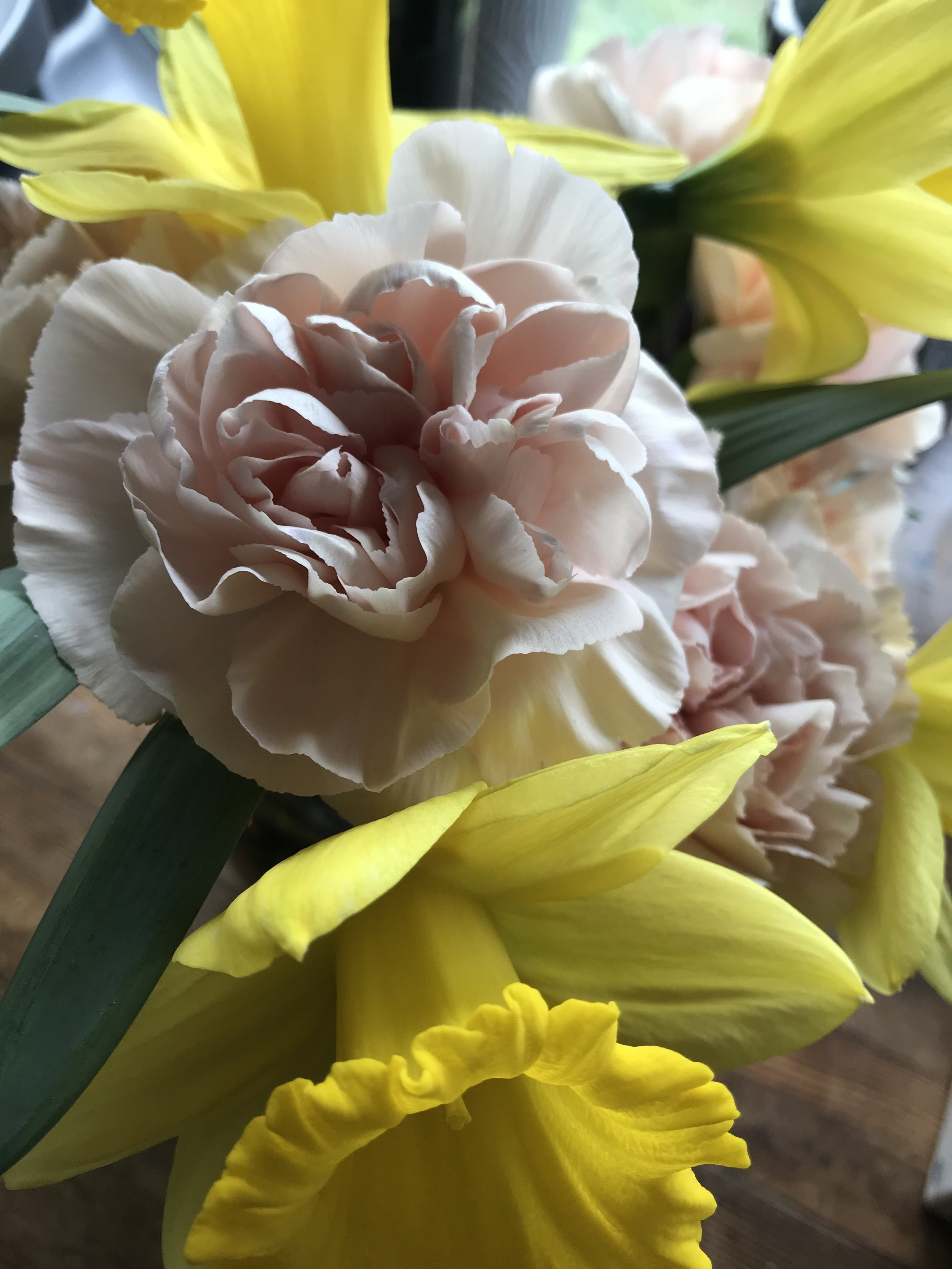 I actually love carnations. I had the Hypnosis variety in my wedding bouquet and I couldn't pass up these frilly peachy ones (or the daffodils) at the grocery store.
