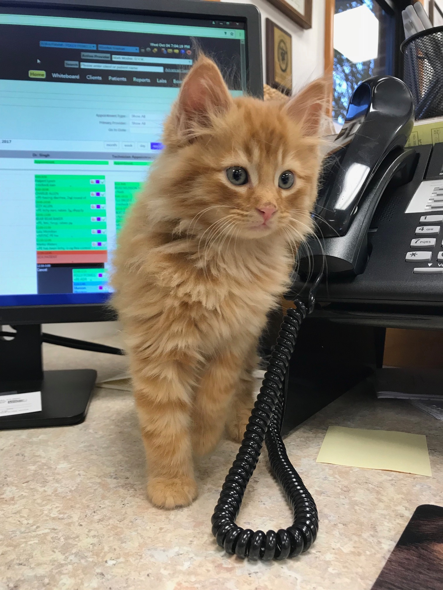 orange kitten by phone.jpg