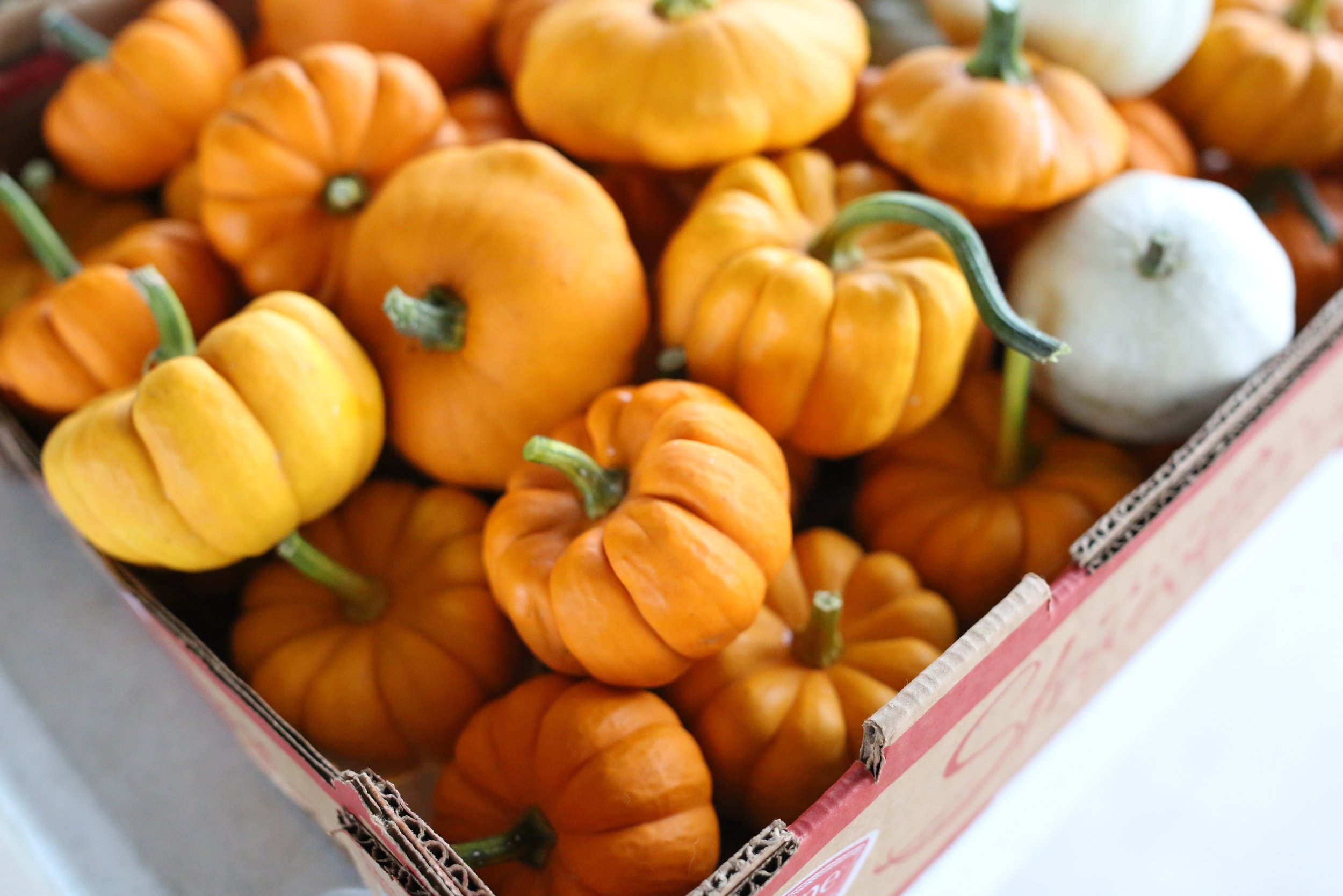 Chelsie Hubbs fall pumpkins