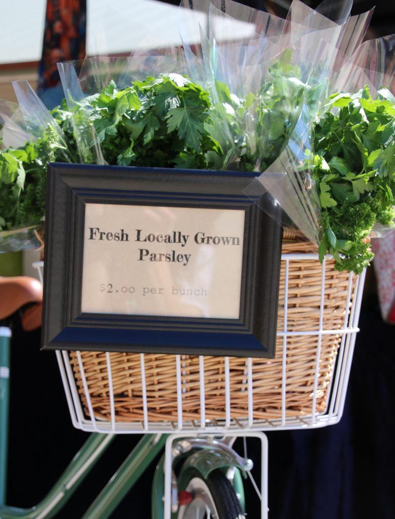 parsley-in-bike-basket-800x1051.jpg
