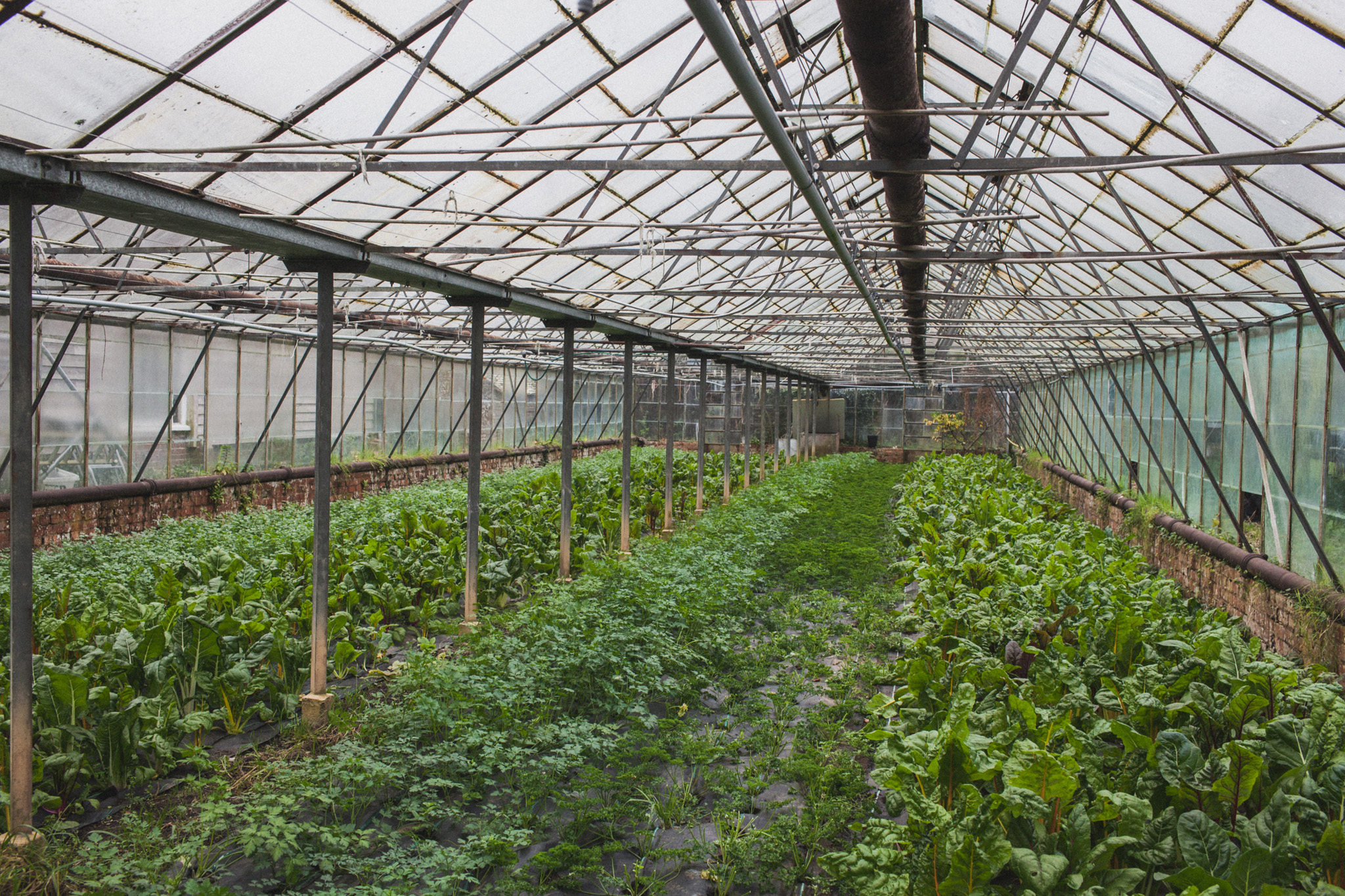 Barcombe Nurseries is an organic vegeatable box business in Sussex, photography by Emma Gutteridge