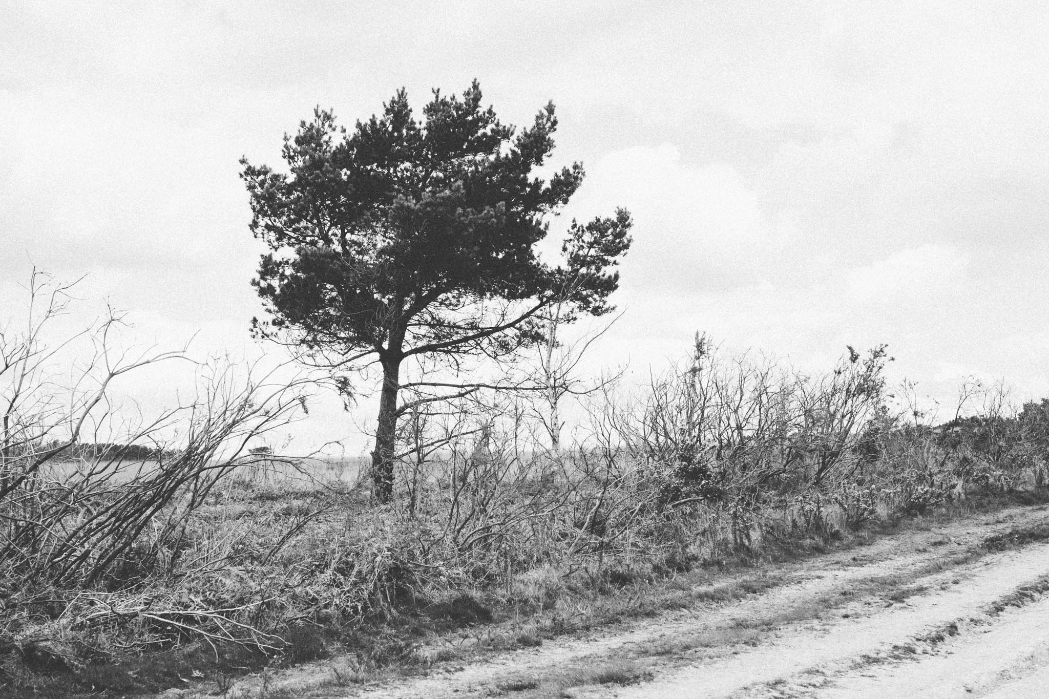 Sussex Walks - The Old Airstrip at Ashdown Forest. Photograhed by Emma Gutteridge for Retreat, a Sussex food and lifestyle blog. Photos taken on a Fuji XT1