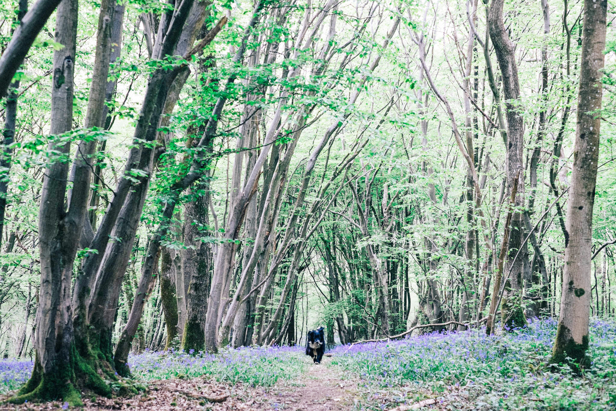 Blackbrook wood near Ditchling, East Sussex. Bluebell woods East Sussex. Sussex walks. Photography by Emma Gutteridge. Retreat // a food and lifestyle blog born in Sussex.