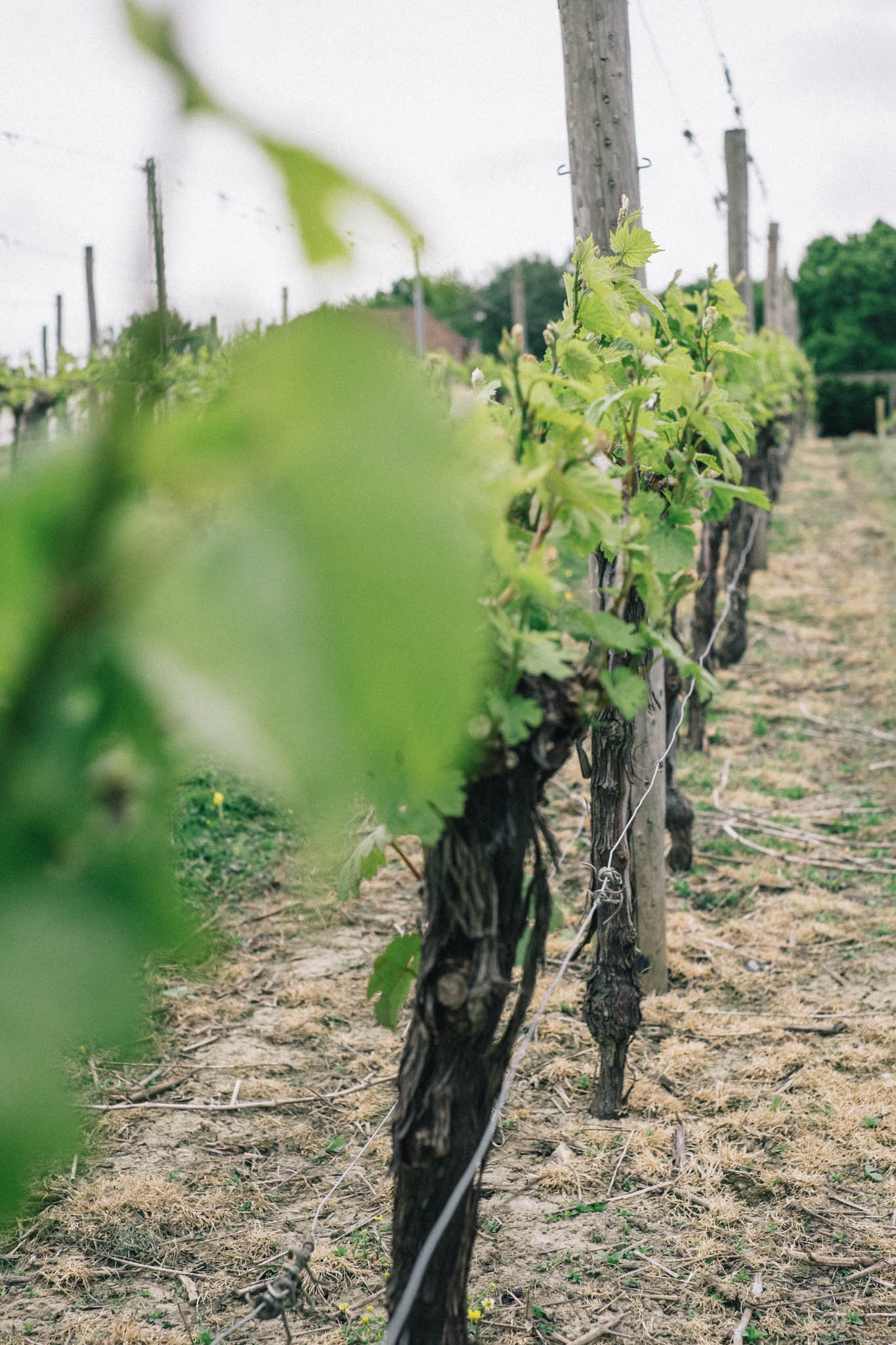 Sussex wine and vineyard bus tour by Brighton Food Festival. Photography by Emma Gutteridge for Retreat blog.