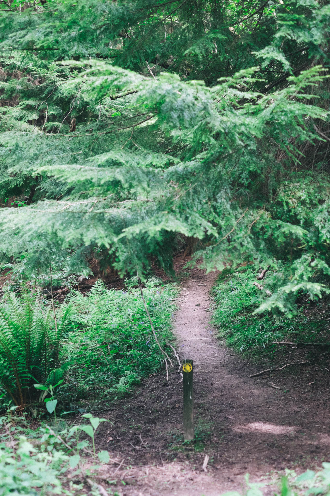 Sussex walks - Sheffield Forest circular on Retreat - a food and lifestyle blog for busy people. Photography by Emma Gutteridge for Retreat blog.