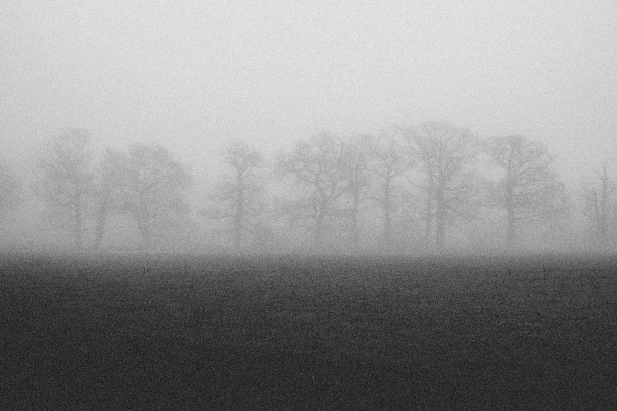 Mist in Sussex 2016. Photography by Sussex photographer Emma Gutteridge