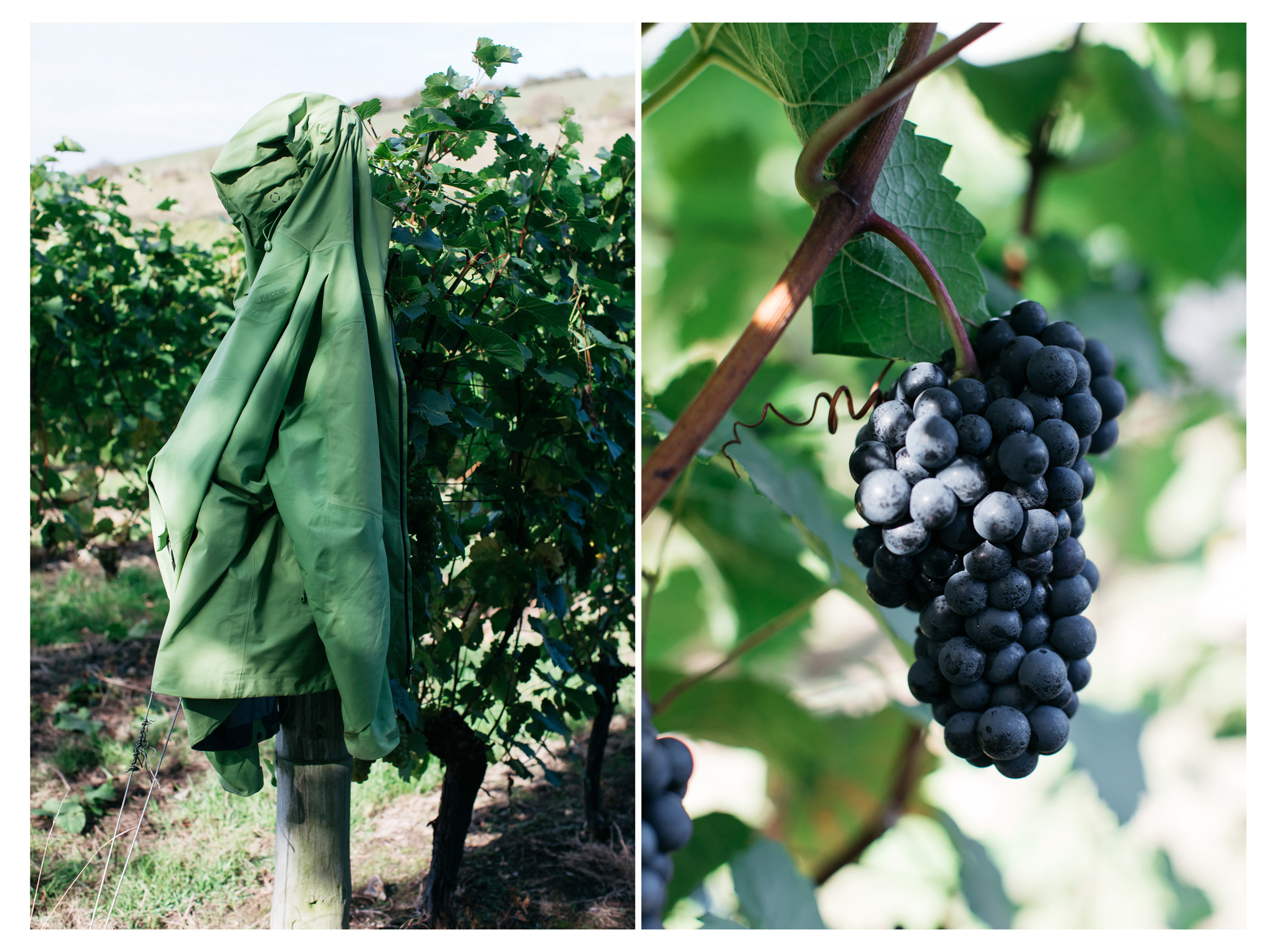 A traditional English wine harvest with lunch at Breaky Bottom near Lewes, East Sussex. A great way to get involved with your local food and wine community.  Retr-eat is a food and lifestyle blog based in Sussex with a focus on local producers.