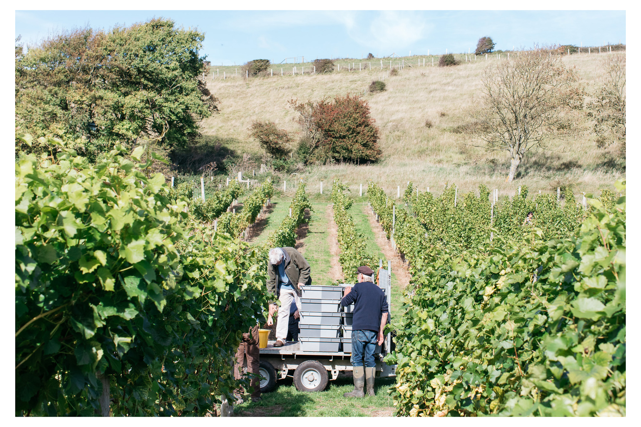 A traditional English wine harvest with lunch at Breaky Bottom near Lewes, East Sussex. A great way to get involved with your local food and wine community.  Retr-eat is a food and lifestyle blog based in Sussex with a focus on local producers written and photographed by food photographer Emma Croman.