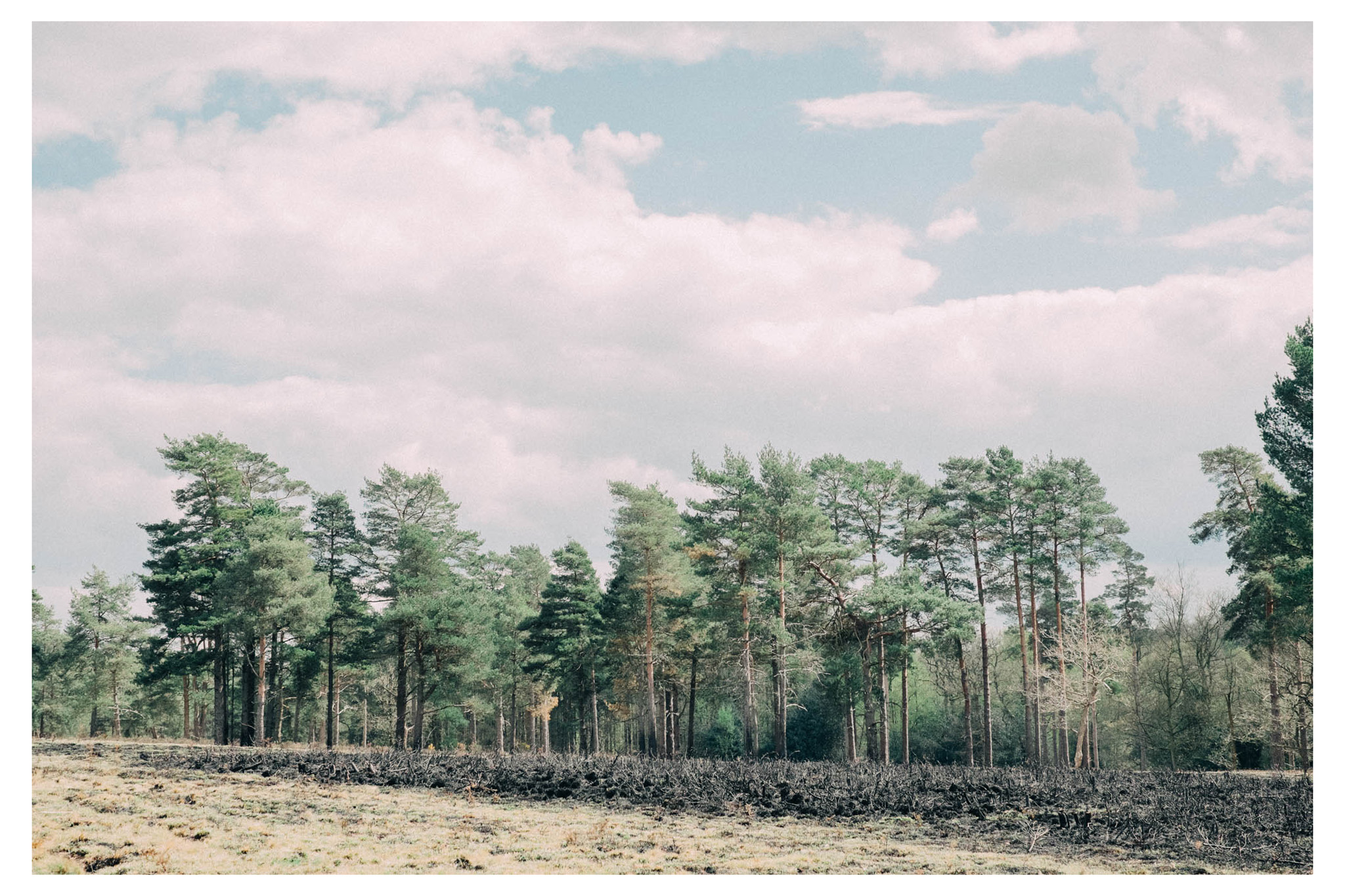 ashdownforest-0149.jpg