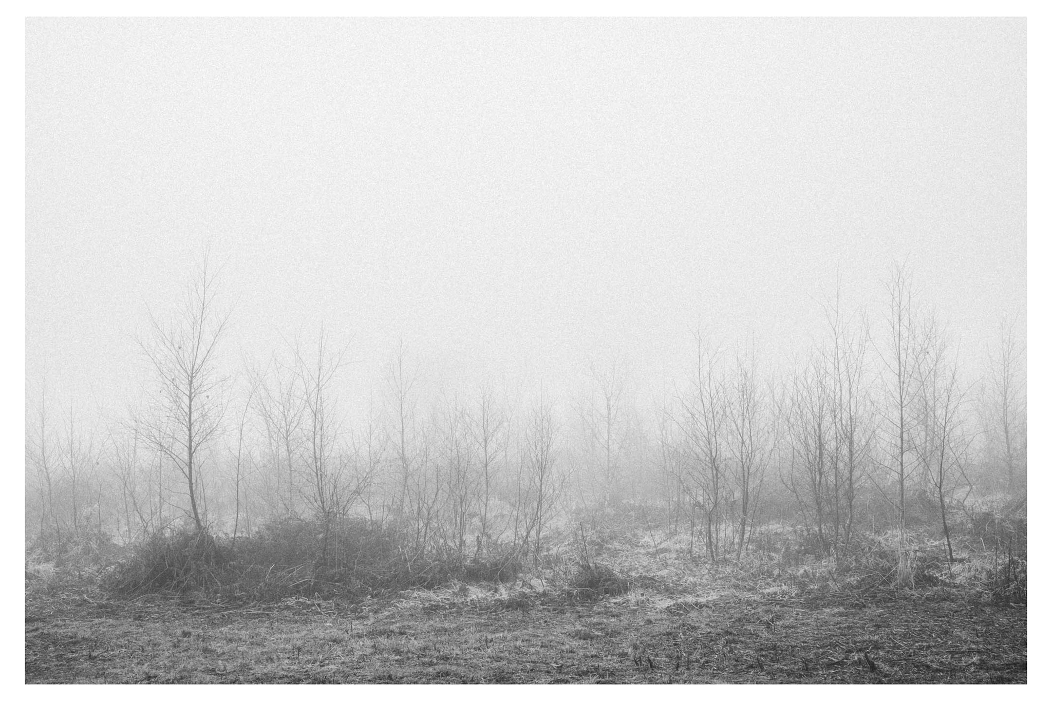 Mist_low-3067-2.jpg