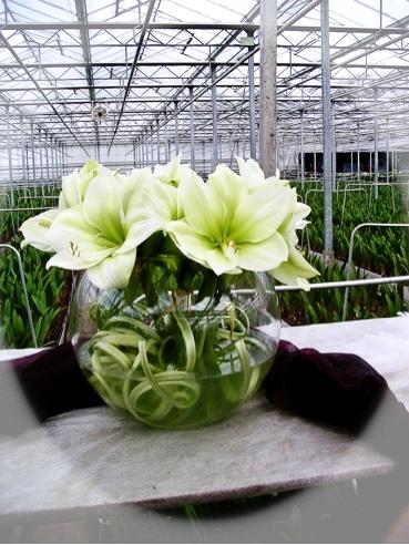 bloem 1.jpg