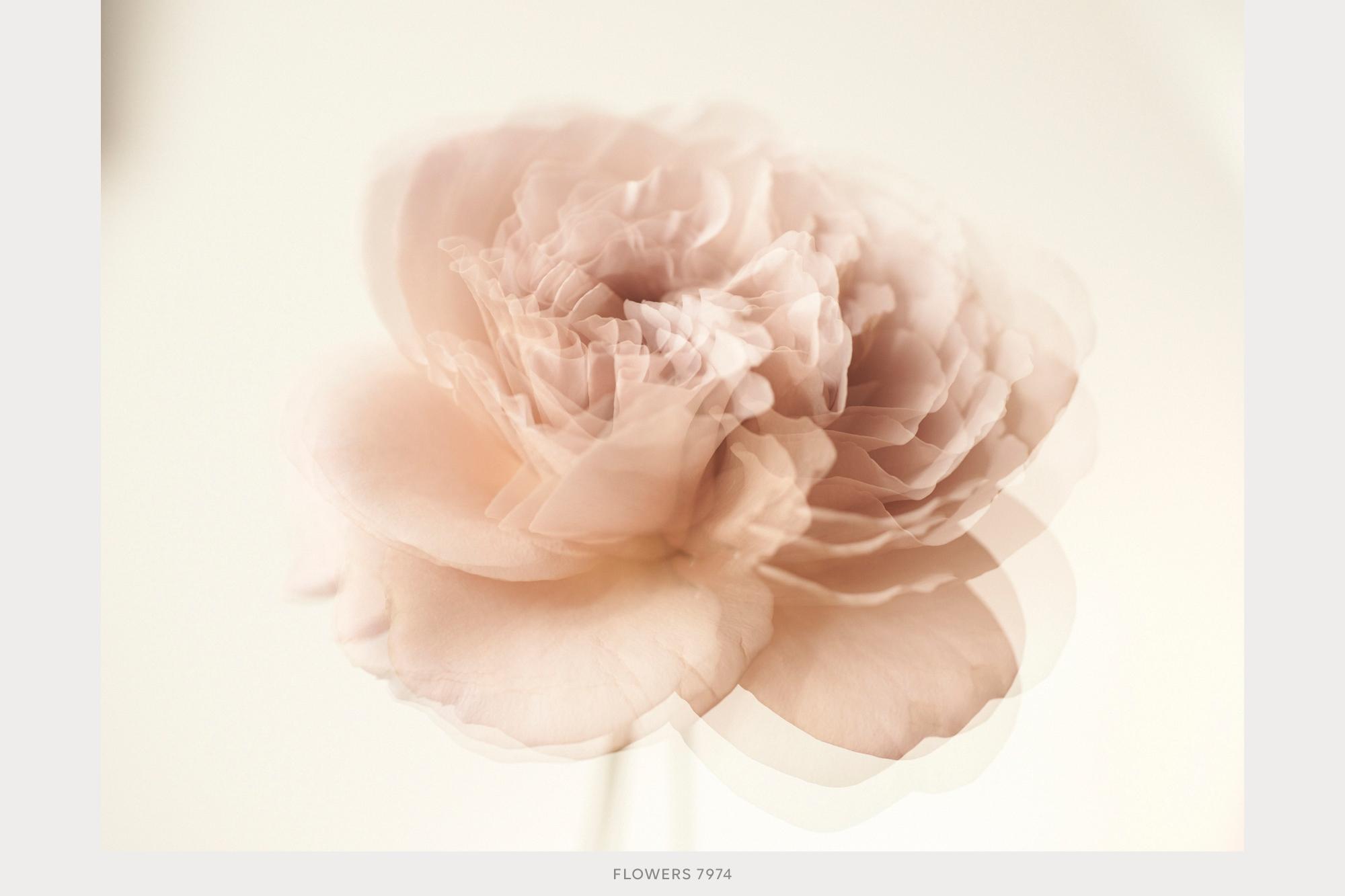 flowers29.jpg