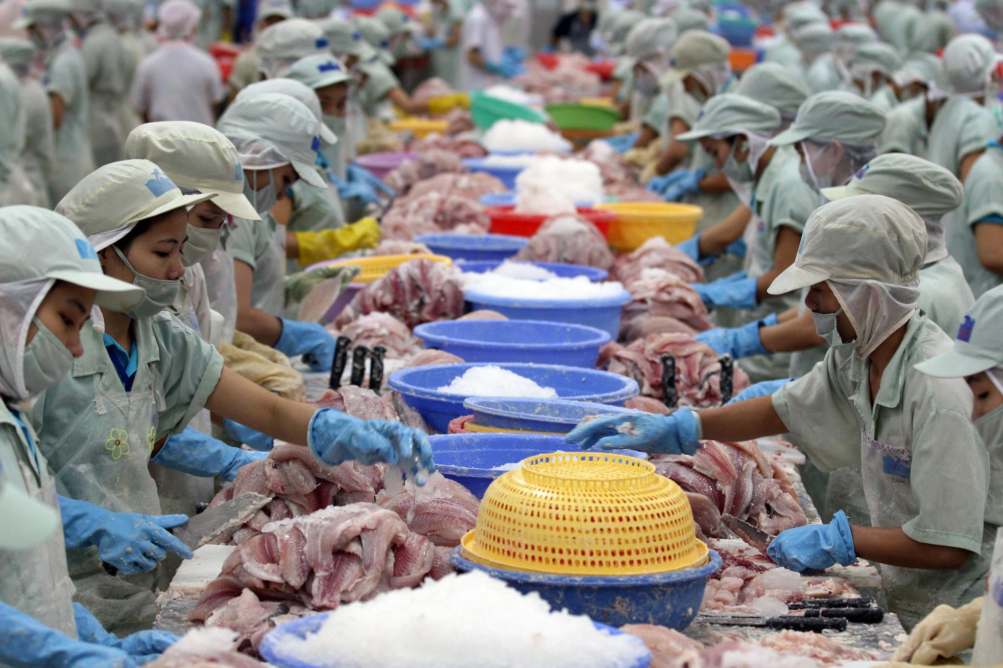 Workers processing fish in Vietnam