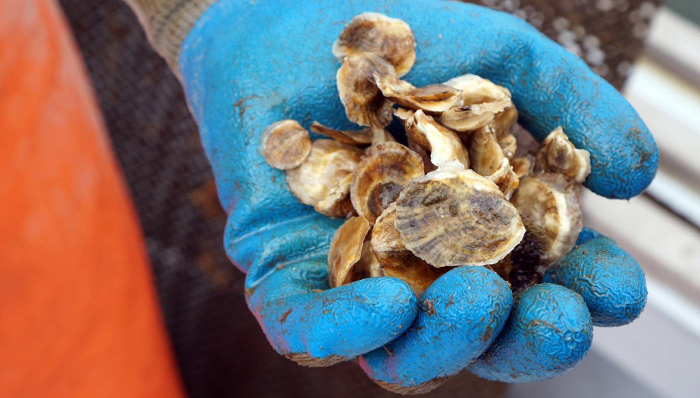 Monks Cove Oysters