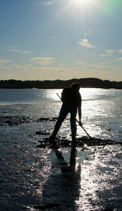 Duxbury Bay Shellfish
