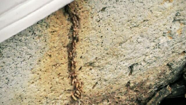 termitetube.jpg