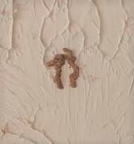 termitecasing.jpg
