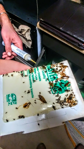 Affordable & Effective Cockroach Pest Control - Contact us for a fast & free cockroach control quote at (513)550-5352