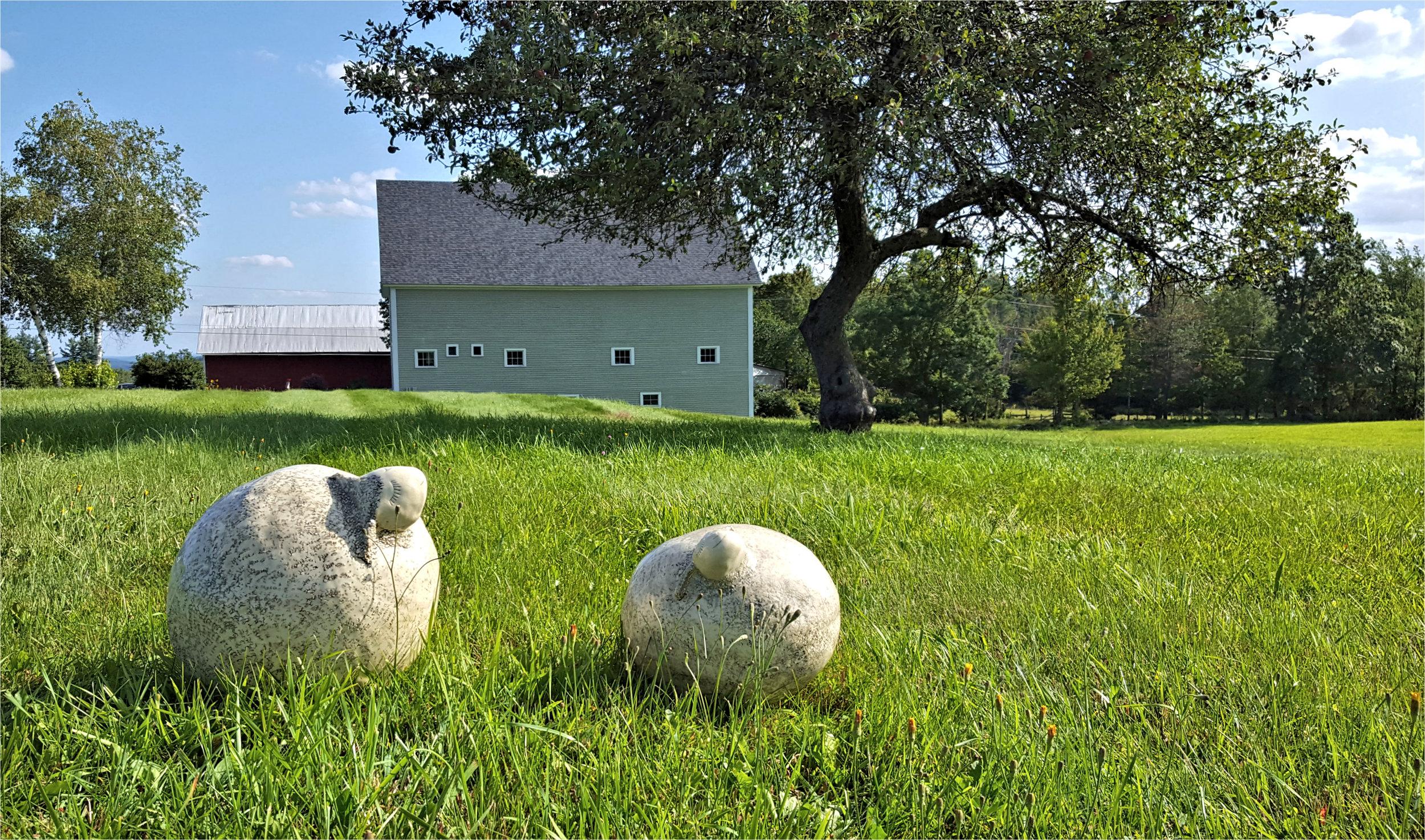 sheep and barn.jpg