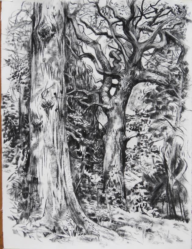 Oaks in Alexandre Park, charcoal on paper