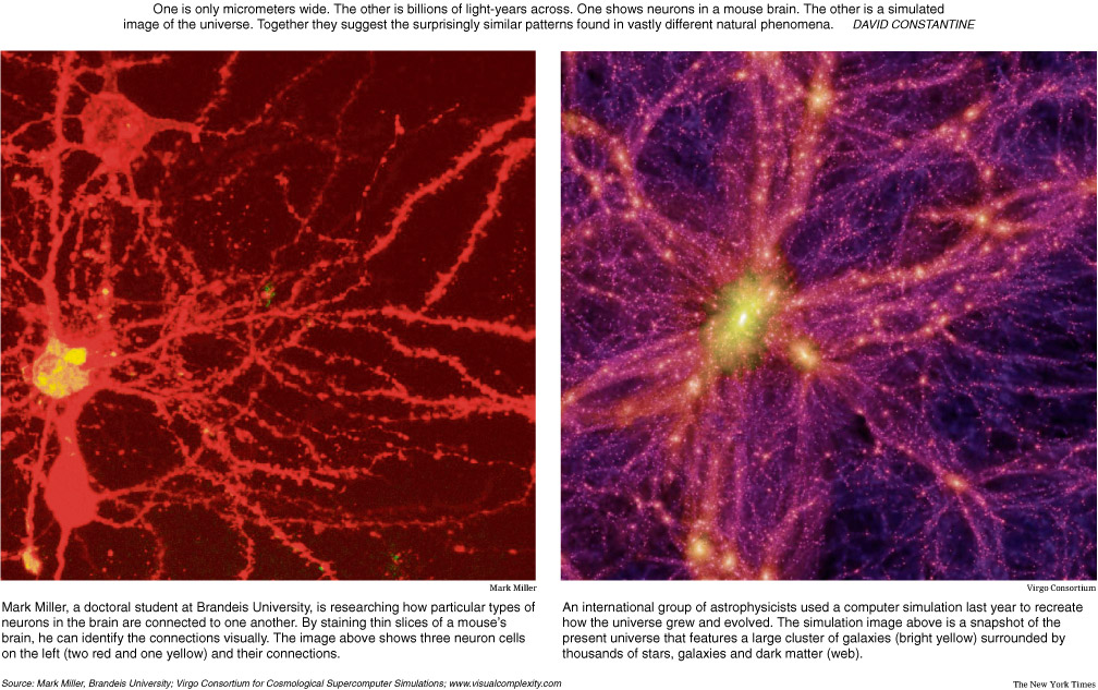 brain neurons (left) galactic filaments (right) / Credit: Virgo Consortium, The New York Times