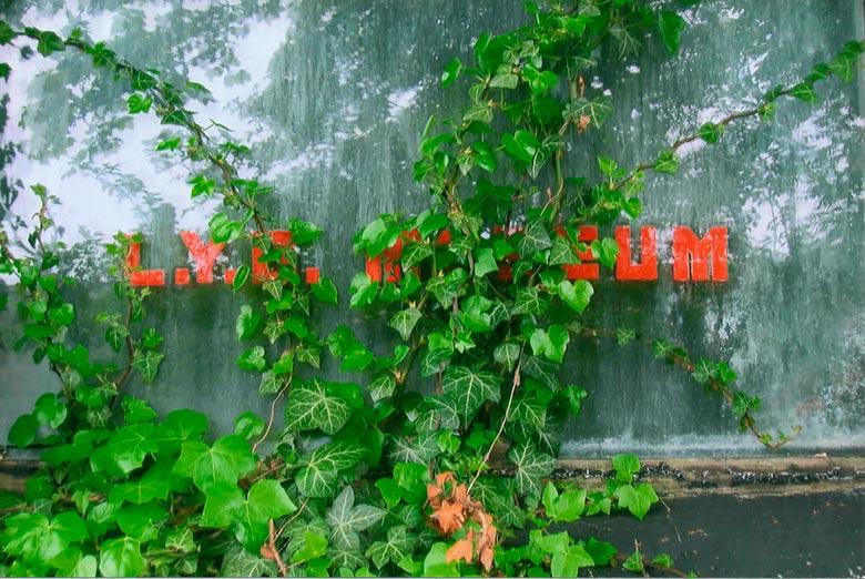 LYC window ©LYC Foundation