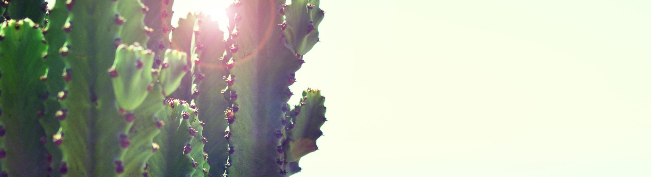 Cactus sunlight_cropped.jpg