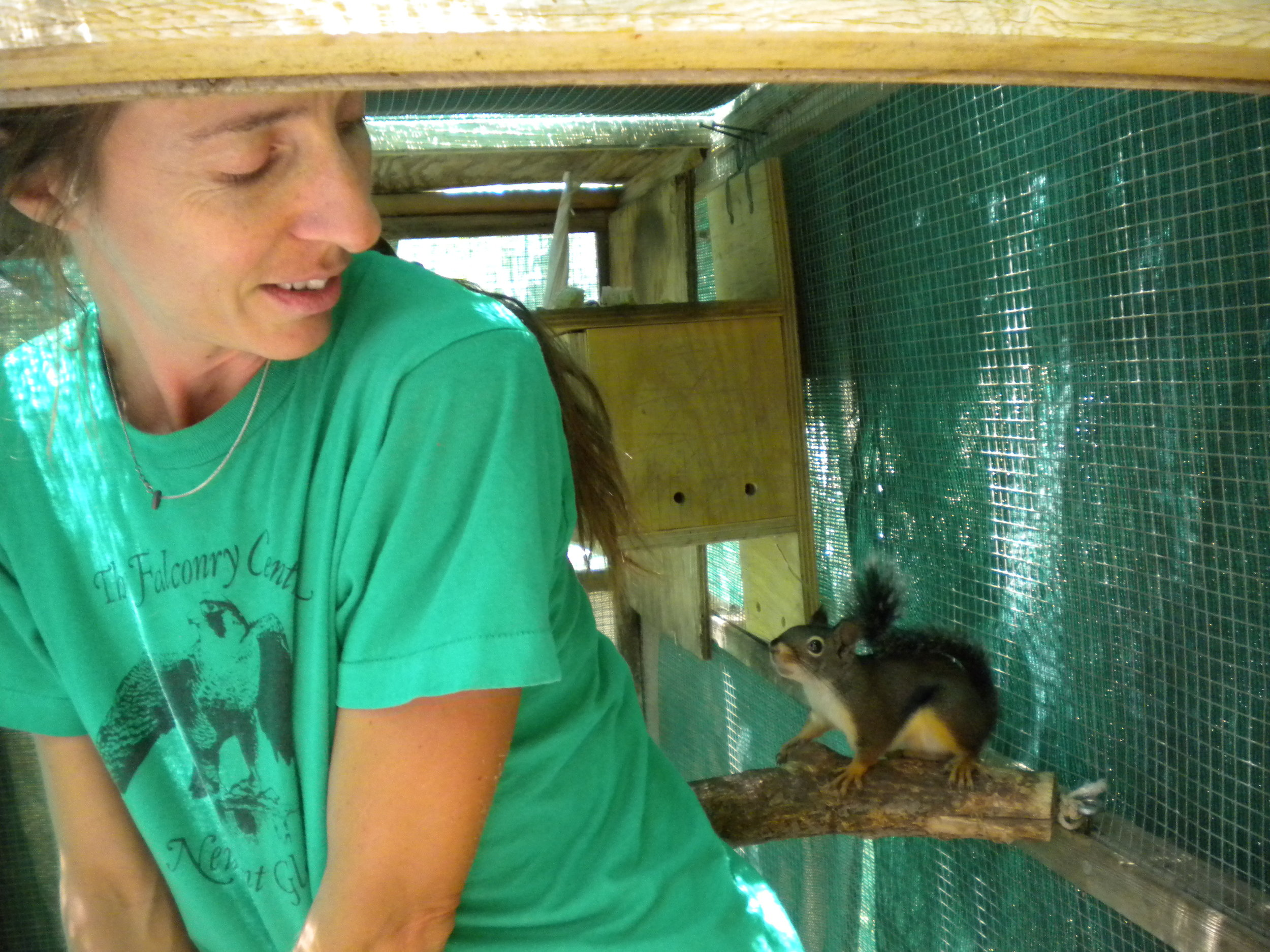 INJURED, ILL OR ORPHANED   We care for wildlife