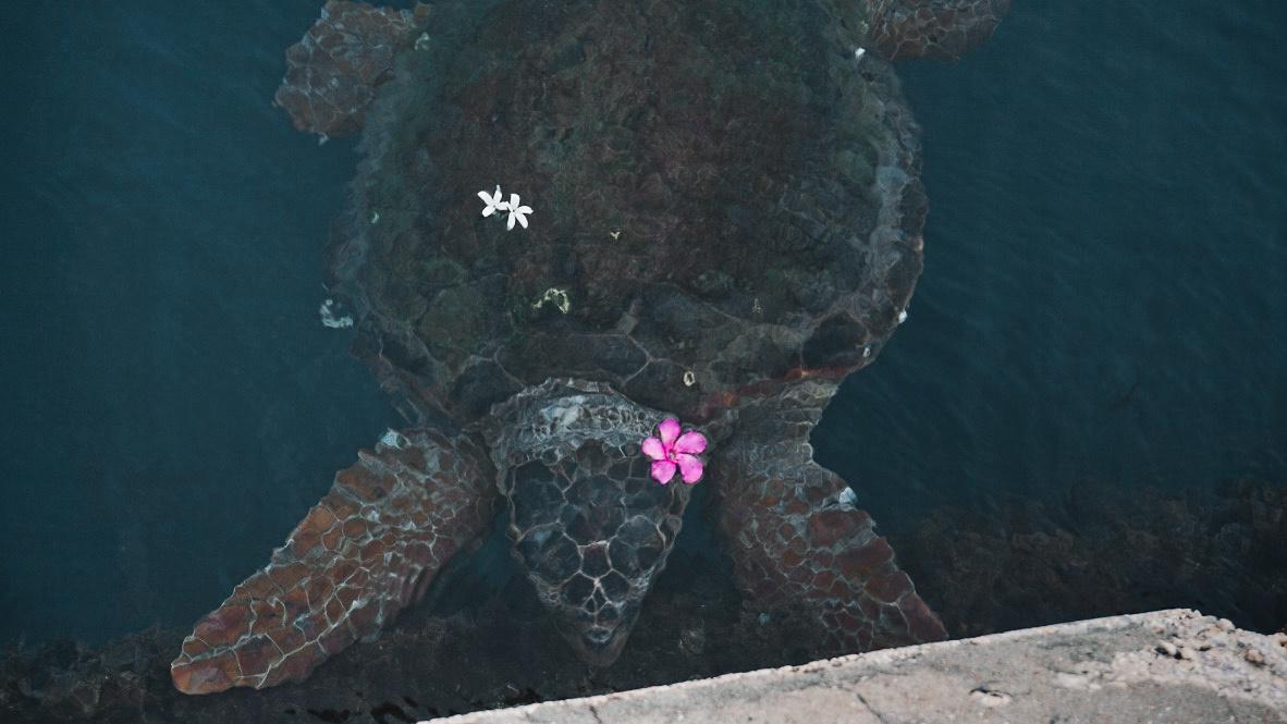 Carretta Turtle.jpg