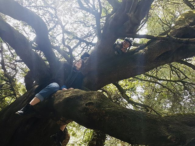 You can't fall if you don't climb - but there's no joy in living your whole life on the ground. Be brave little one 💚🌲 #30dayswild #30dayswild2019 #wildlifetrust #yorkshirewildlifetrust #outdoor #nature #outdoorlearning #STEM #STEAM #lovelearning #explore #engage #inspire #learningthroughplay #kidsoutdoors #adventures #science #risk #dreambig #faceyourfears