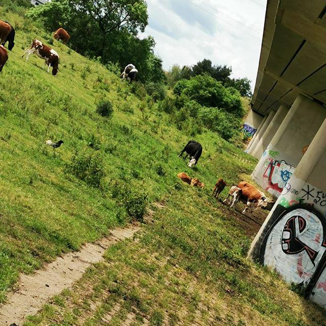 When wildlife meets urban life 🌿🏙 #30dayswild #30dayswild2019 #wildlifetrust #yorkshirewildlifetrust #outdoor #nature #outdoorlearning #STEM #STEAM #lovelearning #explore #engage #inspire #learningthroughplay #kidsoutdoors #adventures #photography #wildphotography #art #artwork #urban #citylife #ourplanet #kidswithcameras