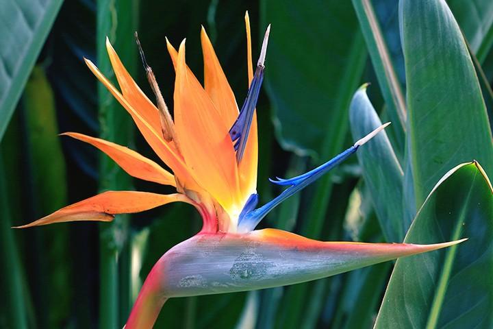 hero-birdofparadise-720x480.jpg