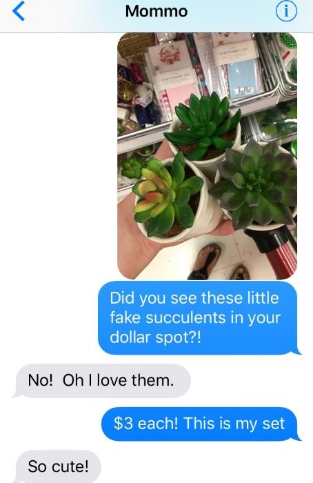 Succulent Text.jpg