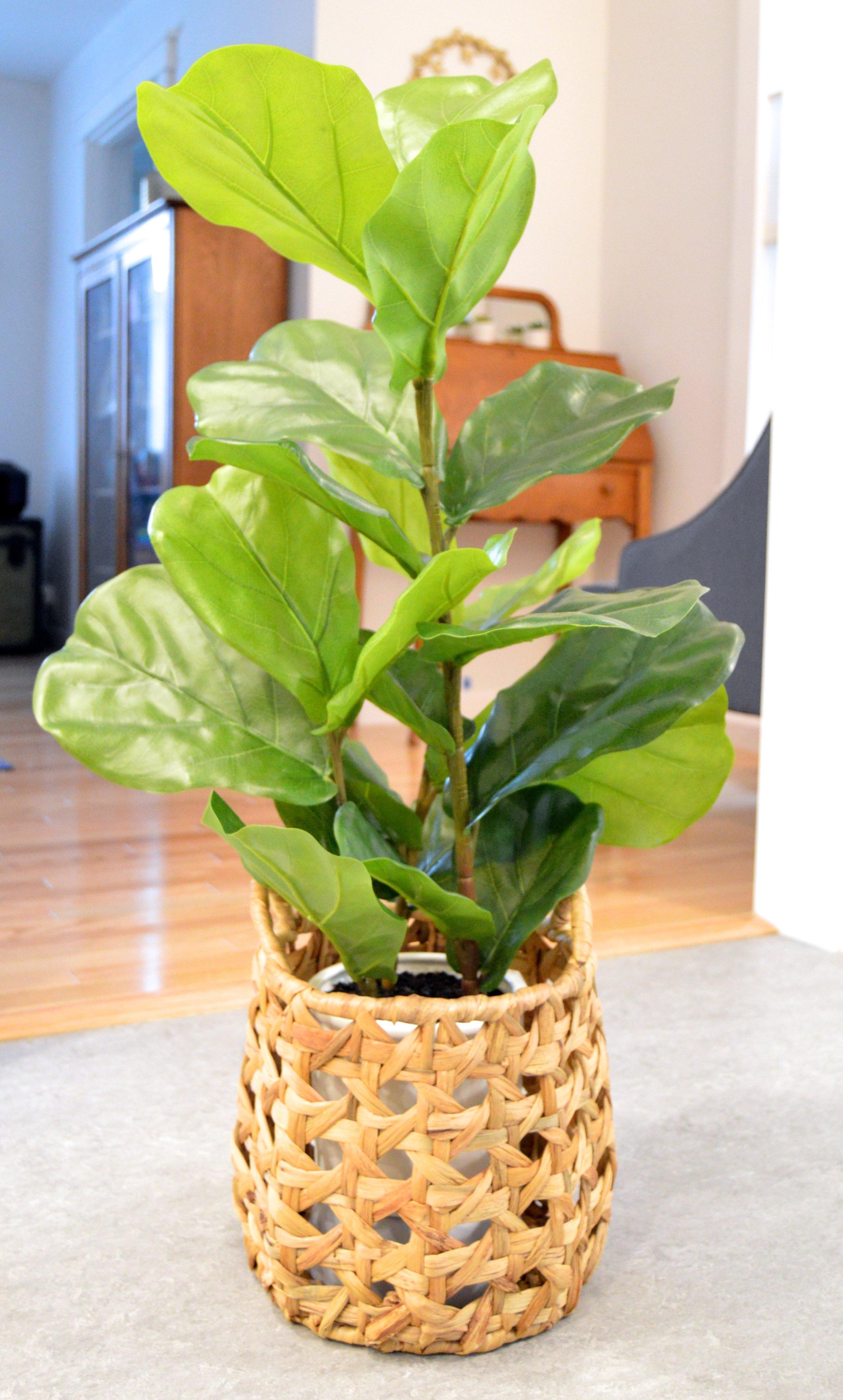 Plant Bowl After.jpg