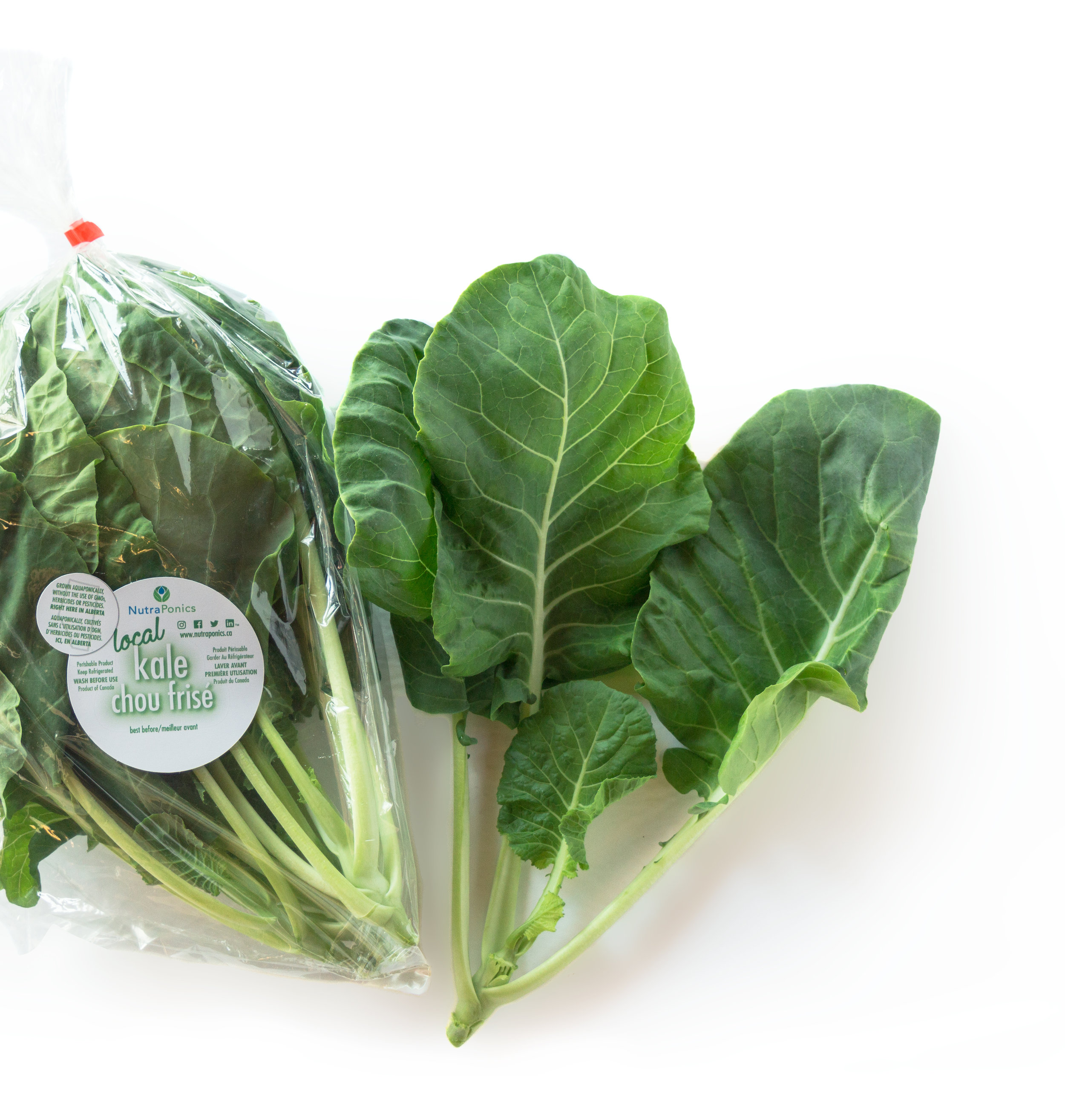 Kale - Our hybrid kale is crunchy but still very tender, like a young cabbage rather than conventional kale. The ribs are sweet and crisp and make a perfect substitute for celery! The entire leaf may be steamed, braised, stewed, fried, sautéed, baked, or left completely raw, allowing you to set course on your own mouth feel adventure!