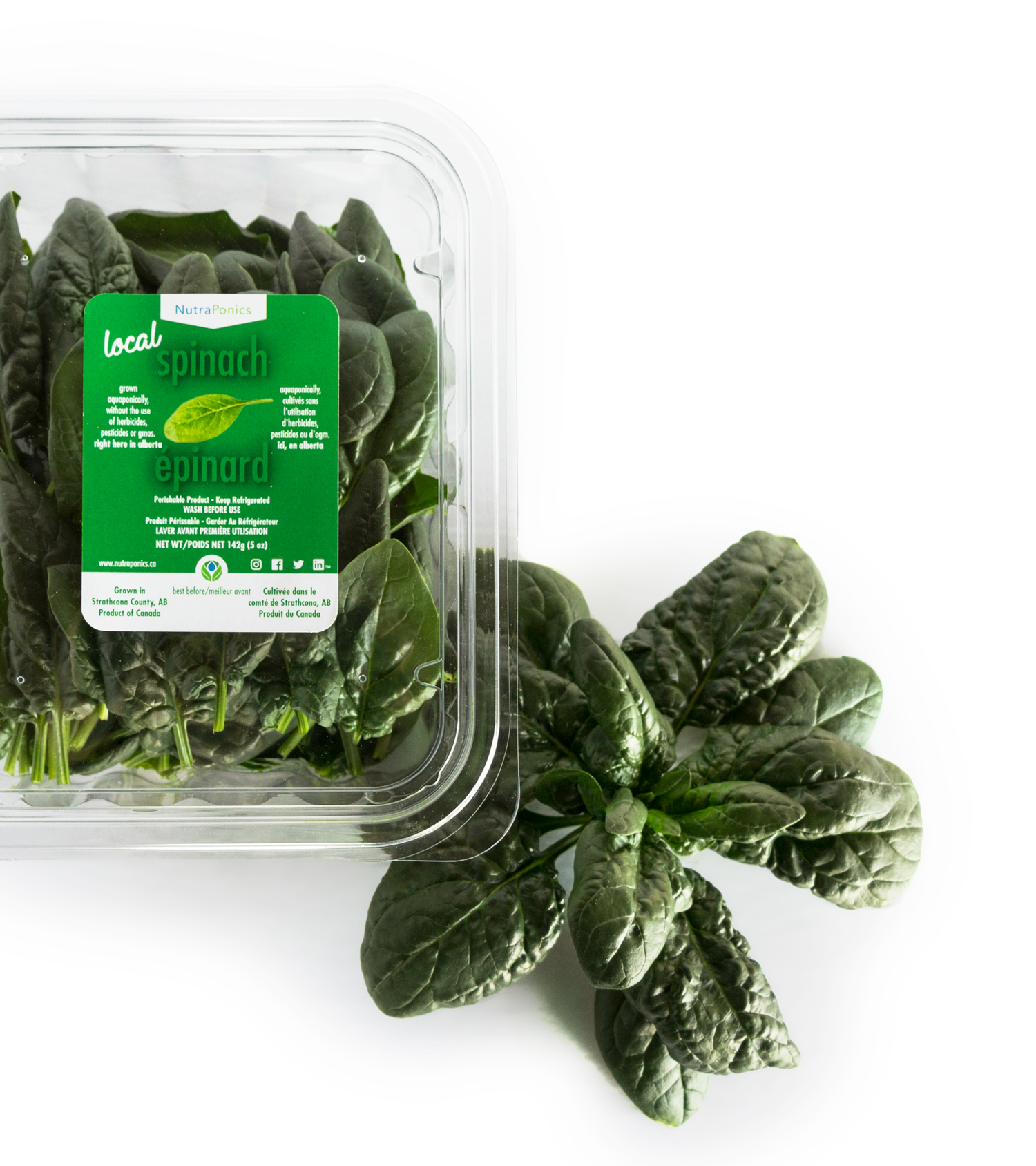 sPINACH - Spinach is an excellent source of iron as well as vitamins A and C. Not only is our deep green spinach nutritious, it is also extremely versatile. It can be used raw in a salad or cooked in any number of dishes, including soups, quiches, and soufflés, or on its own as a delicious side dish.