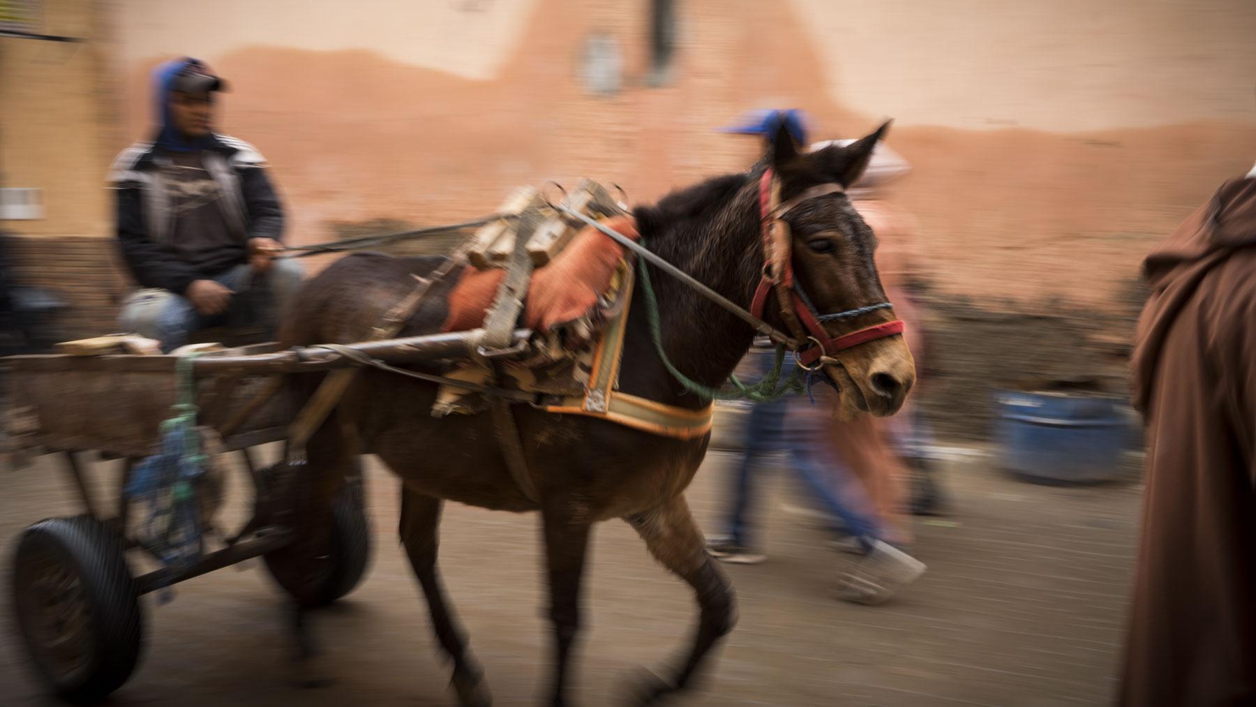 Lane Peters_Morocco_03.jpg