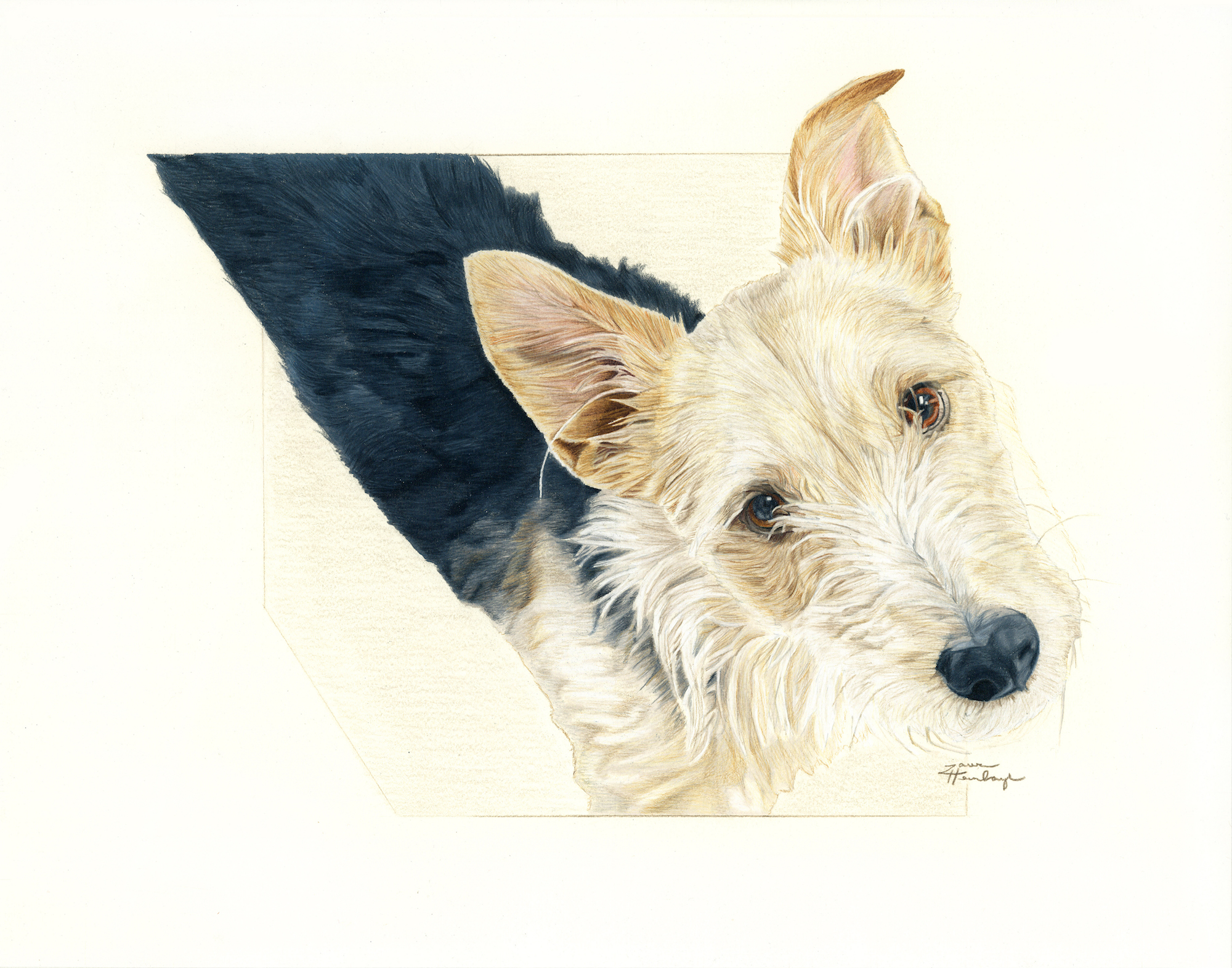 Beau the Terrier Mix (2016)