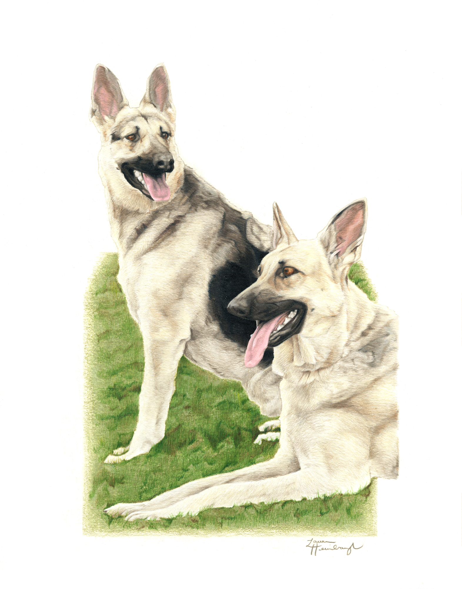 Callie and Chloe the German Shepherds (2016)