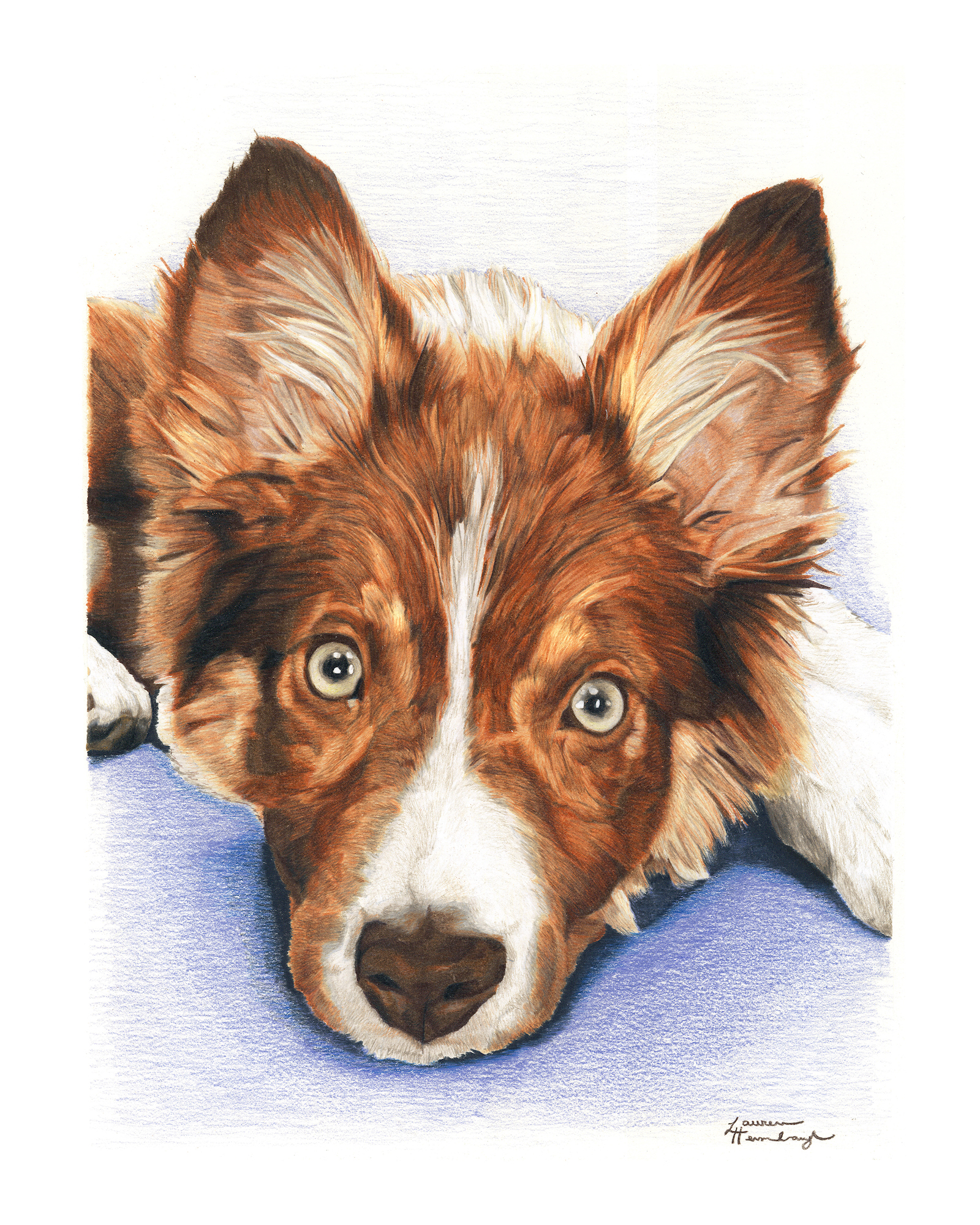 Pip the Border Collie (2015)