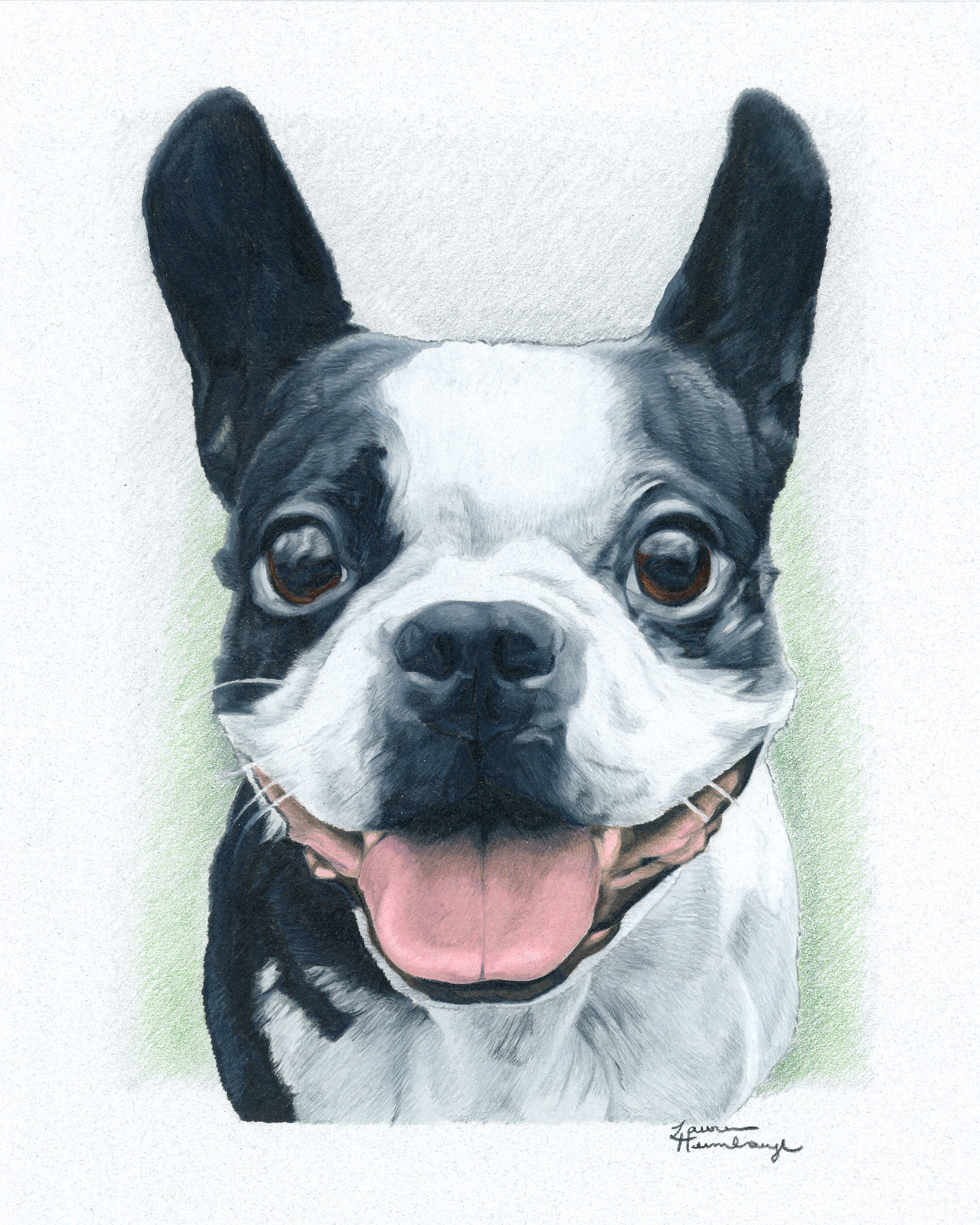 Dribbles the Boston Terrier (2015)
