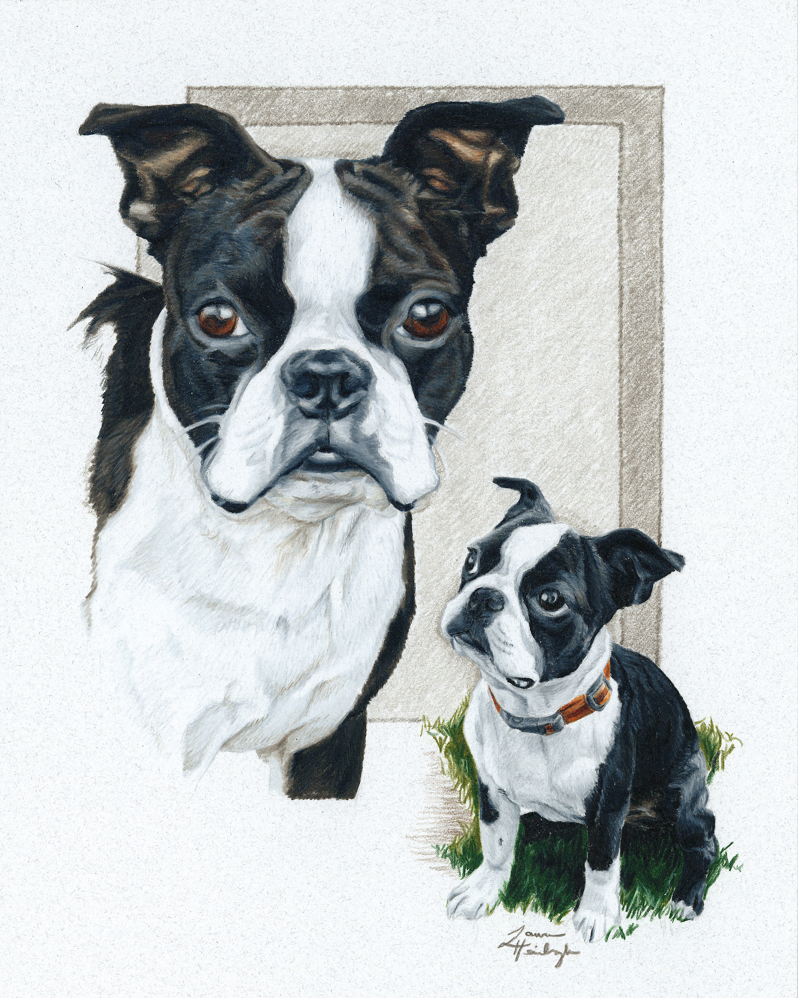 Chevy the Boston Terrier (2015)