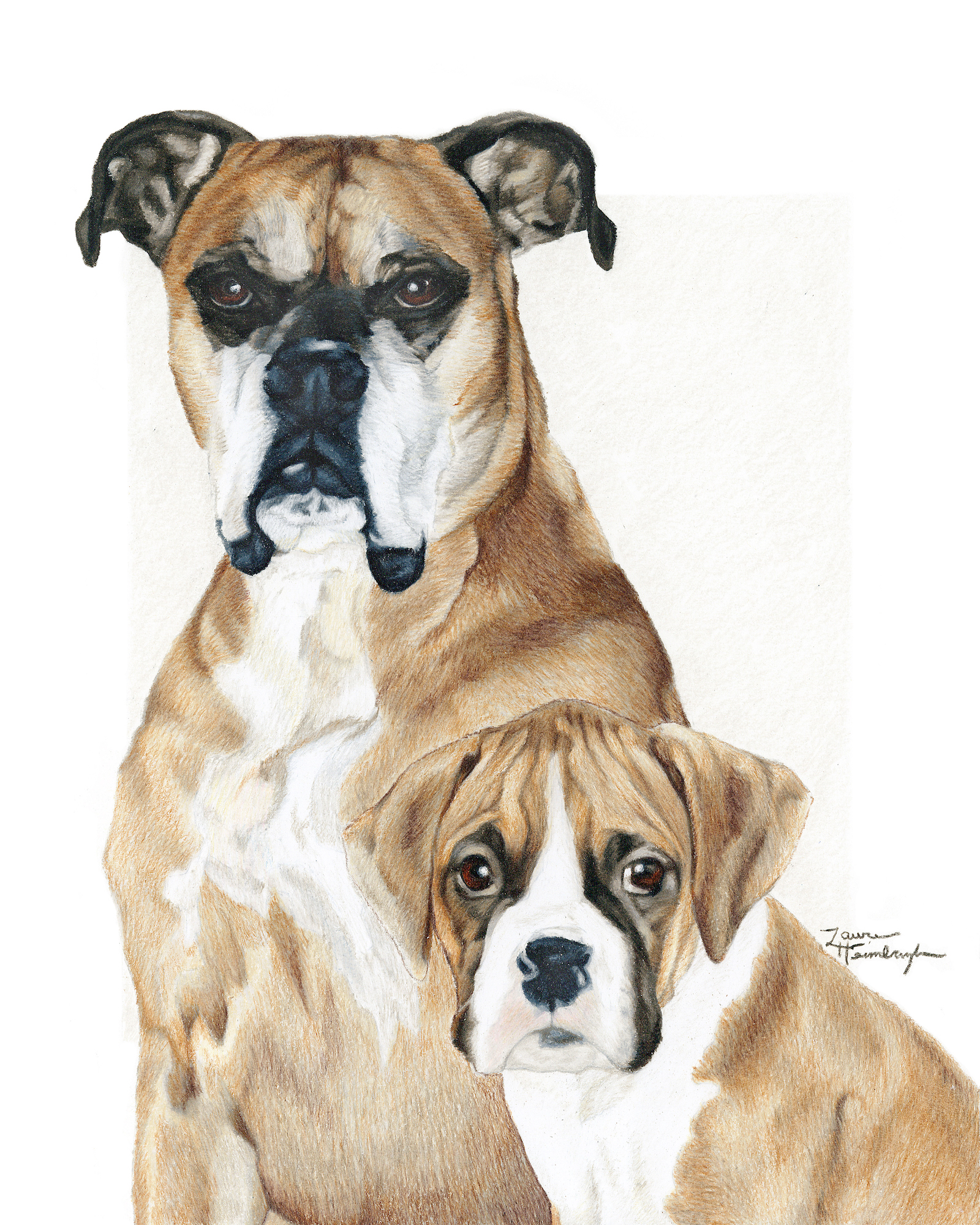 Diesel and Oakley the Boxers (2015)