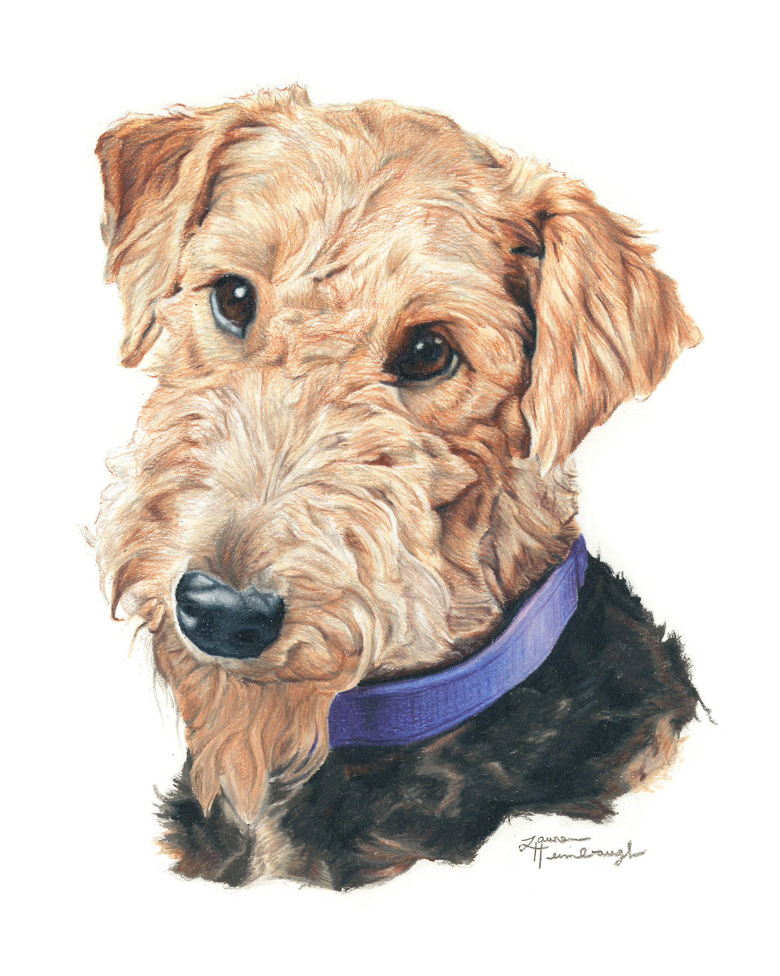 Willow the Airedale Terrier (2015)