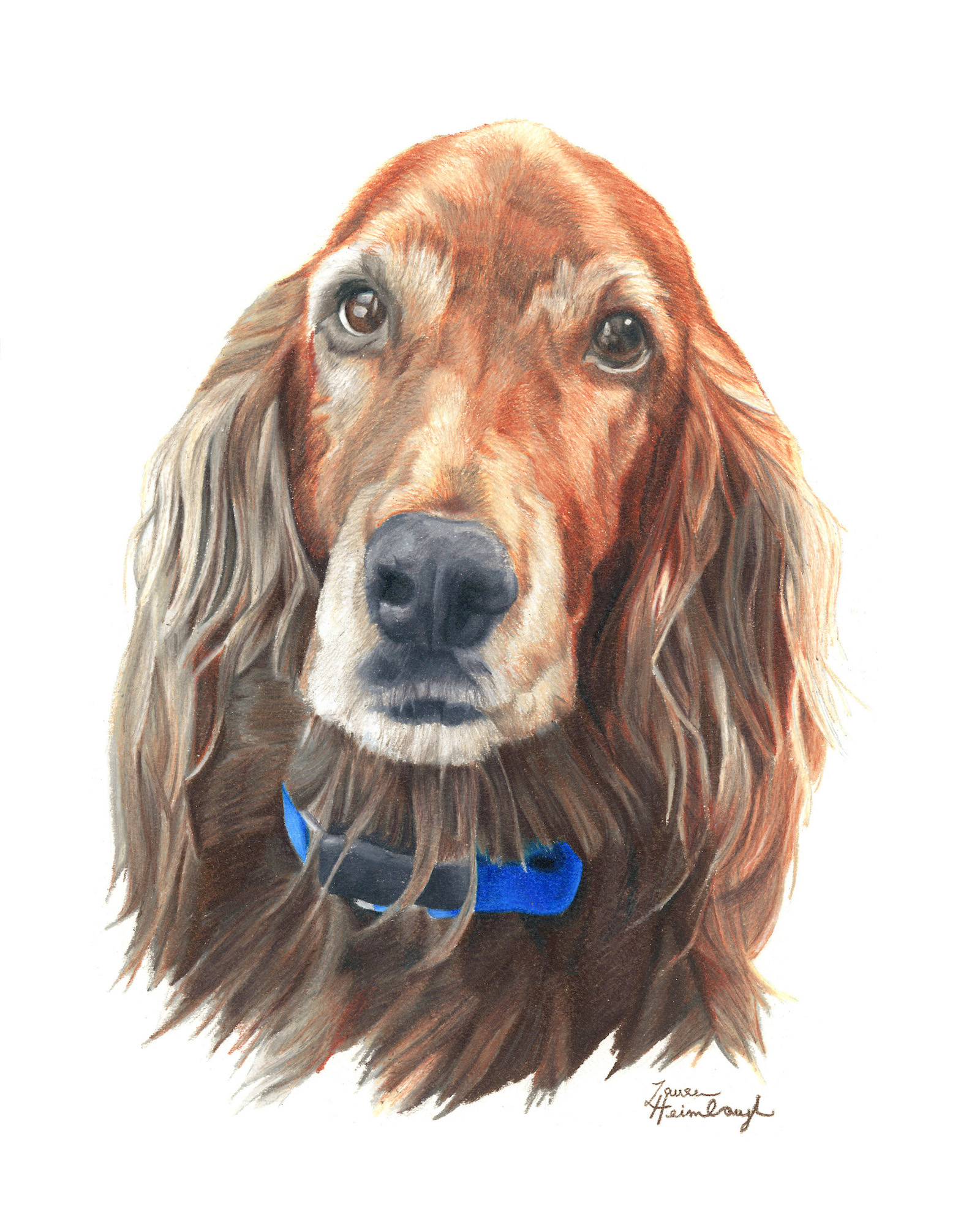 Bailey the Irish Setter (2015)