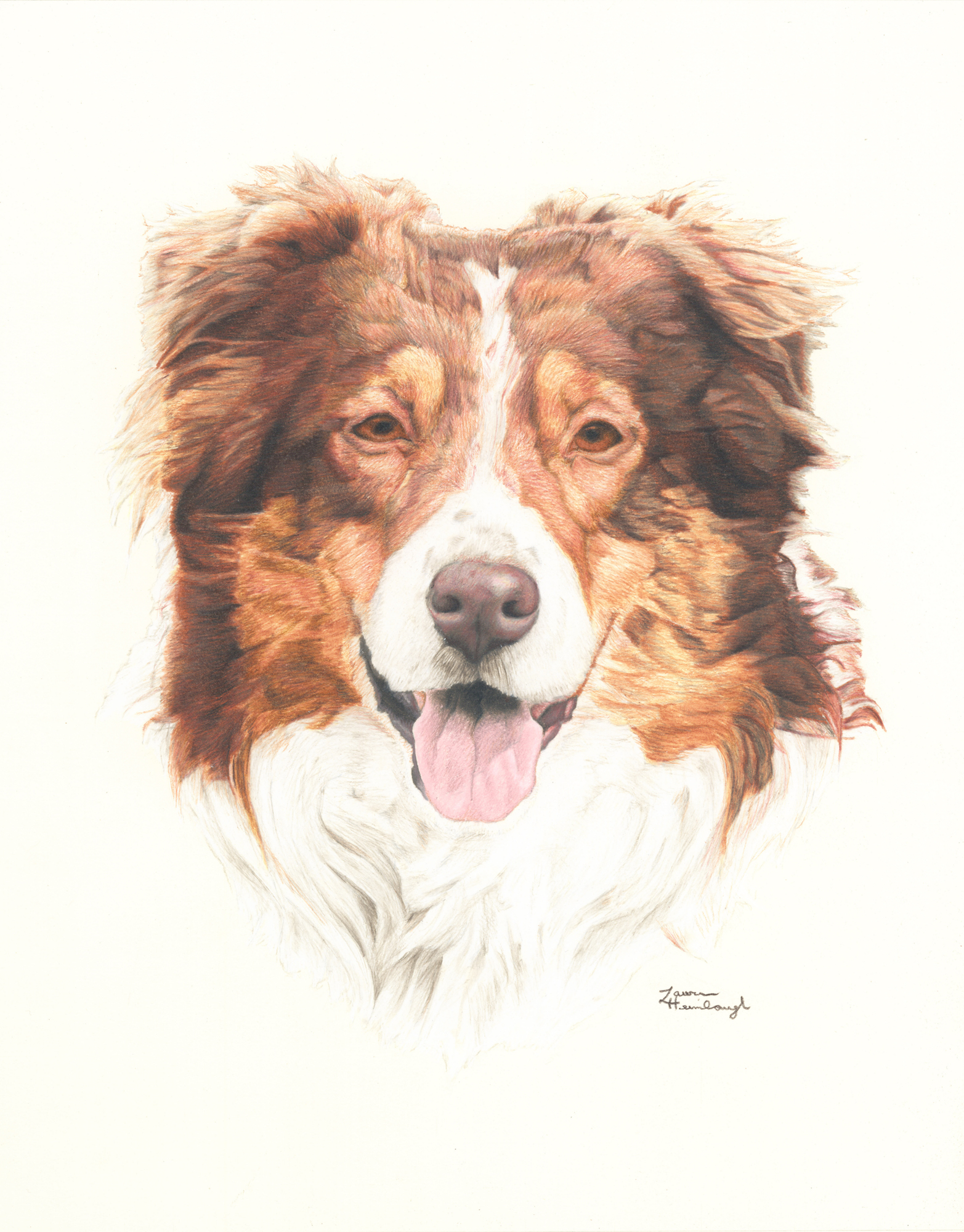 King the Australian Shepherd (2014)