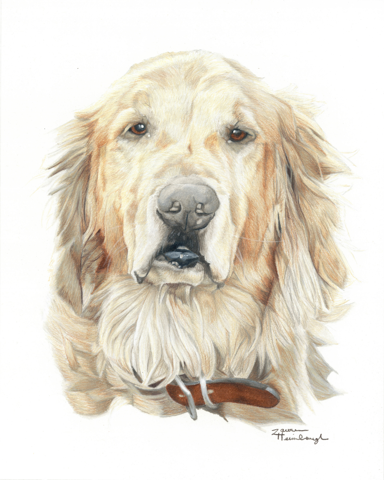 Barclay the Golden Retriever (2014)
