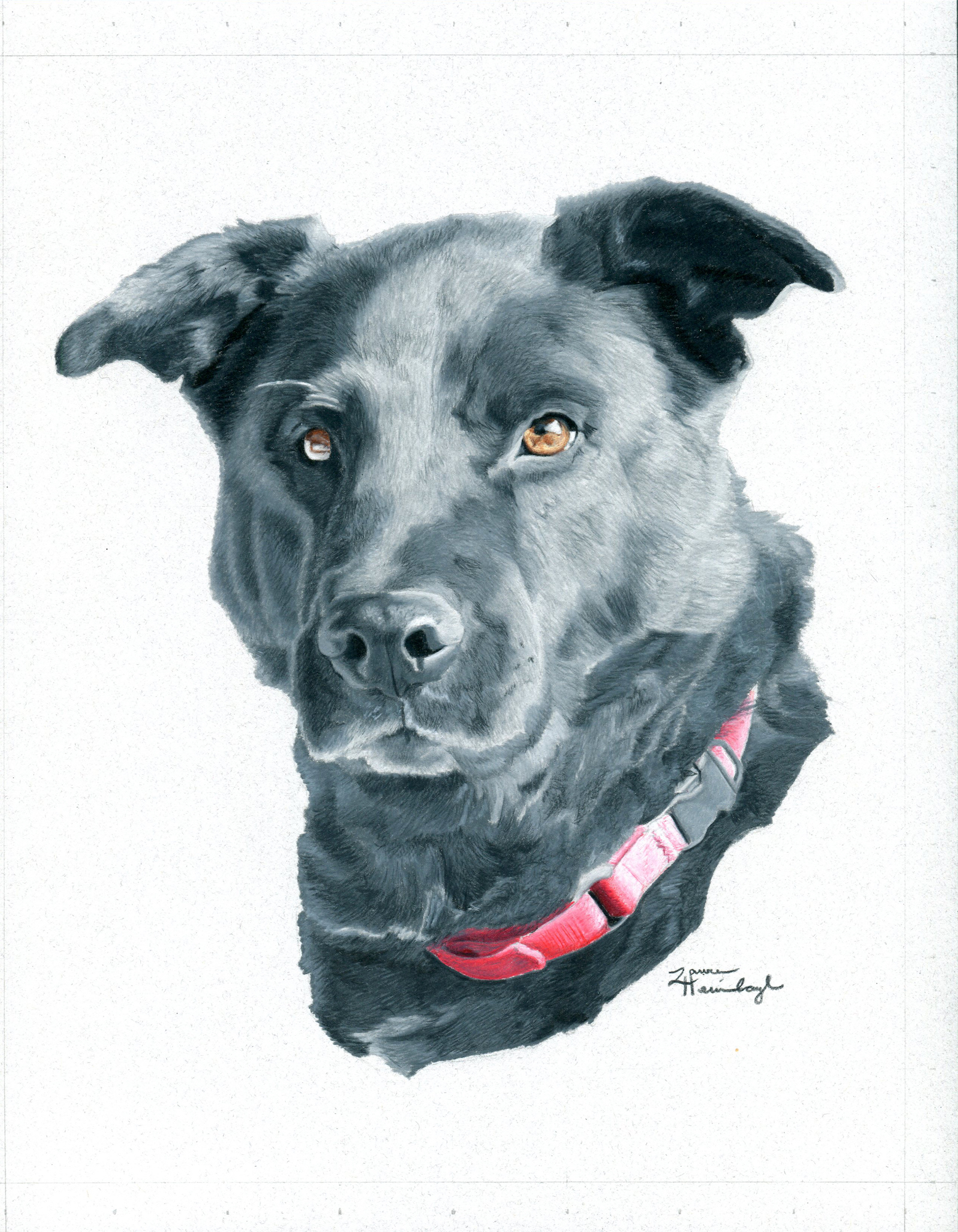 Rascal the Black Lab / Shepherd Mix (2014)