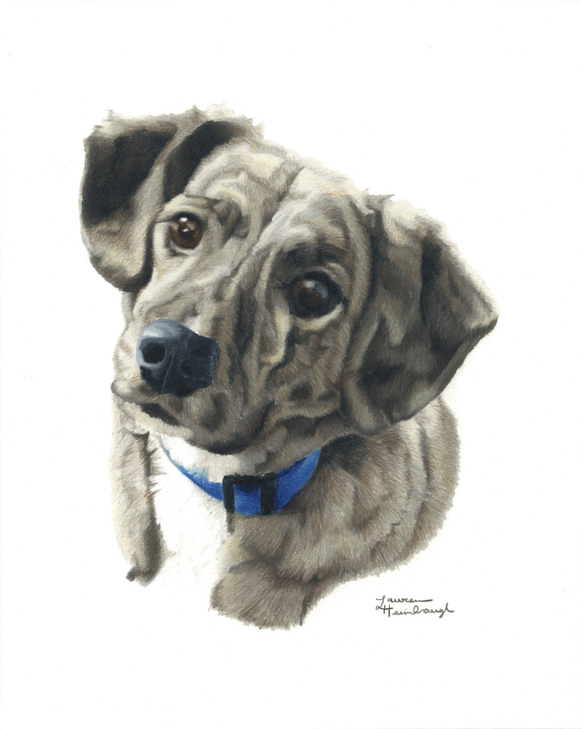 Jack the Mountain Cur (2013)
